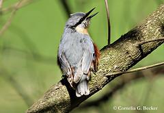 song birds photo