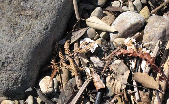 Flotsam at Waitete Bay