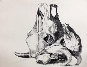 Skull Study - Rewa (Charcoal)