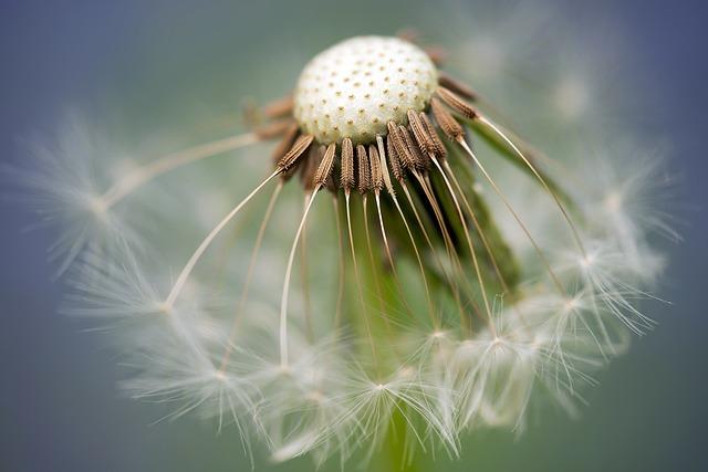 hidden insights,creative process,creativity,the seed